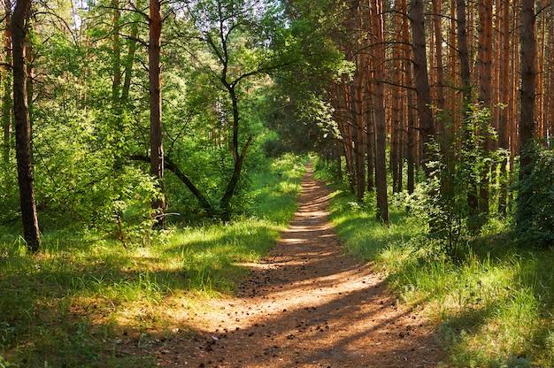 Voetpad voor mensen in het groene bos. nationaal park.