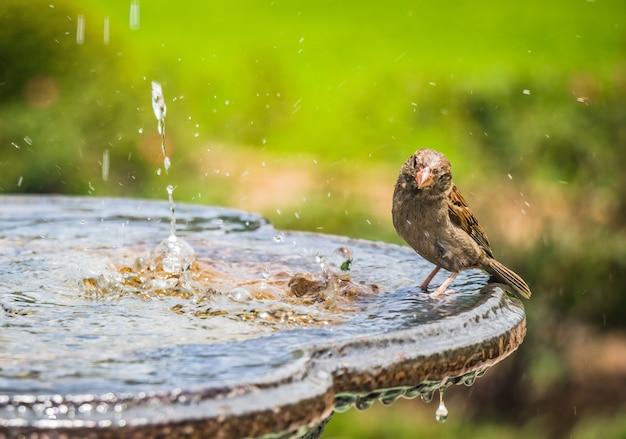 Vogel die een vogelbad neemt in een fontein