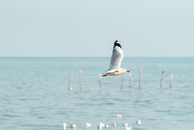 Vogel die (meeuwen) op de hemel bij een aardzee vliegt