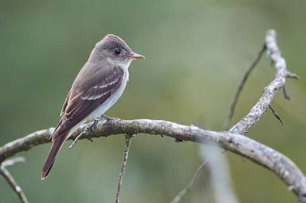 Vogel die op een boomtak rust