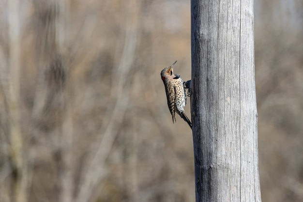 Vogel die zich vasthoudt aan een boom