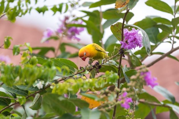 Vogel (dwergpapegaai) op boom in aardwildernis