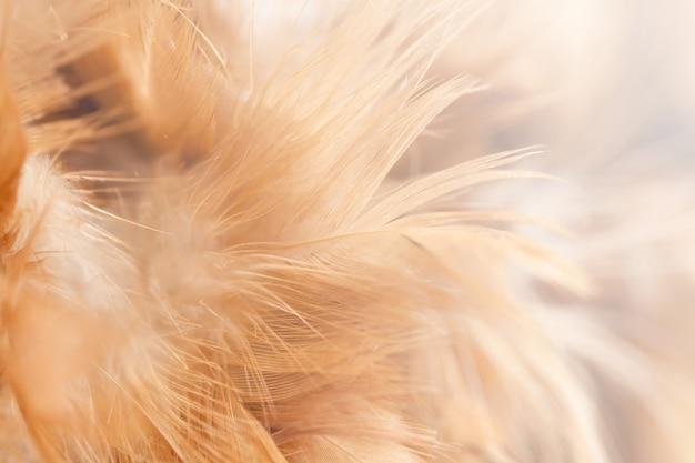 Vogel- en kippenveren in zachte en onscherpe stijl voor de achtergrond