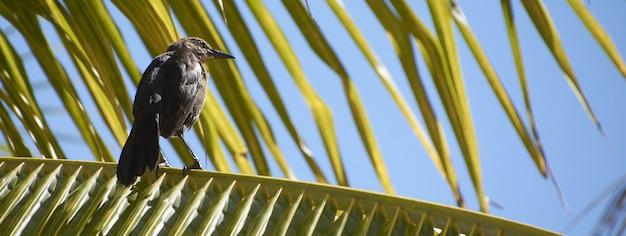 Vogel in de palmbannerafbeelding met kopieerruimte