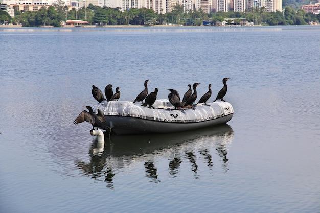 Vogel in de rodrigo de freitas-lagune in rio de janeiro, brazilië