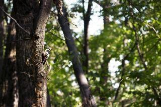 Vogel in een boom