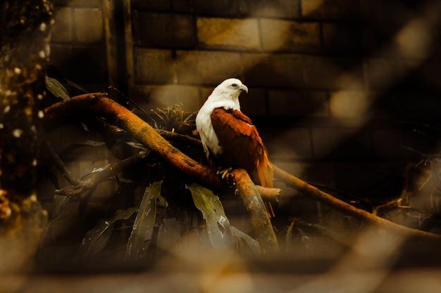 Vogel in een kooi