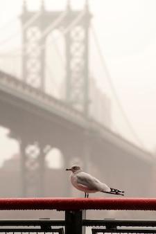 Vogel in forground met de brug van manhattan over de rivier van het oosten in de stad van manhattan, new york, de vs