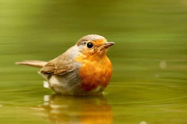 Vogel in het water