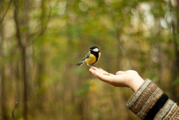 Vogel koolmees parus major zit op de vrouwelijke handpalm