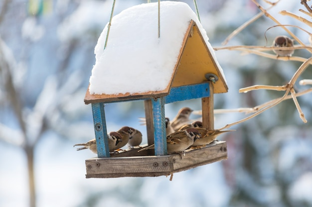 Vogel mus voedertrog