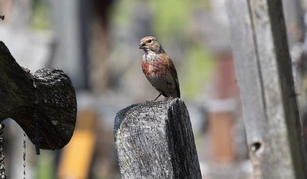 Vogel op de heuvel van kruisen