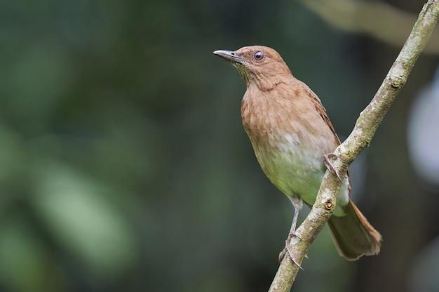 Vogel op een tak die voedsel zoekt
