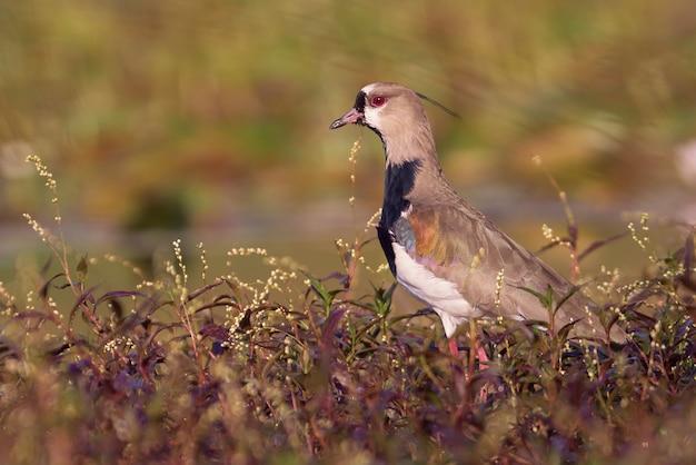 Vogel op een weiland dicht bij moerasland die voedsel zoeken