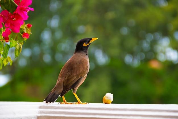 Vogel op raam wil een vrucht eten