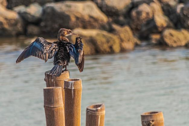 Vogel probeert te vliegen