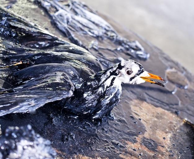 Vogel stierf door olievervuiling op het milieu
