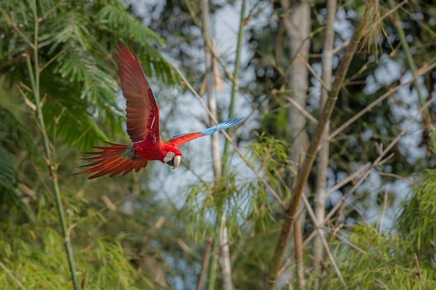 Vogel van zuid-amerika in de natuurhabitat
