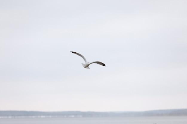 Vogel vliegen zeemeeuw geïsoleerd hemel symbool van vrijheid concept