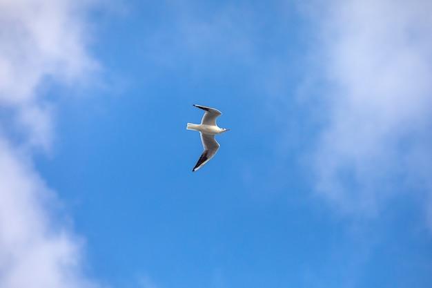 Vogel vliegende zeemeeuw geïsoleerde hemel symbool van vrijheidsconcept. witte zeemeeuw in de lucht.