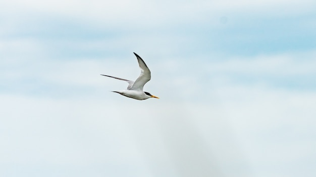 Vogel vliegt in een blauwe lucht, anapa, rusland.