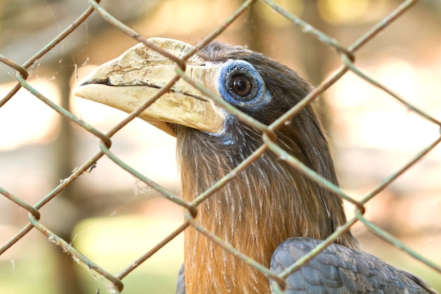 Vogel wordt gevangen en opgesloten in een kooi
