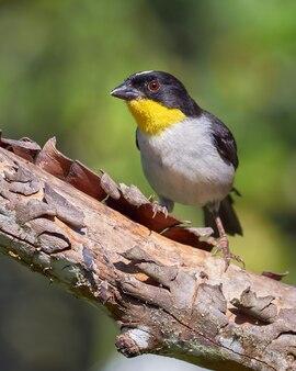 Vogel zat op een droge boom