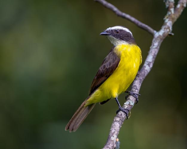 Vogel zat op een tak diagonaal naar links kijkend