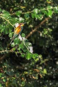 Vogelbij op de takken van een boom wordt neergestreken die