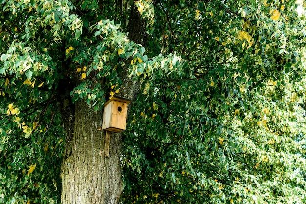 Vogelhuisje op boom in de lente in de vroege herfst