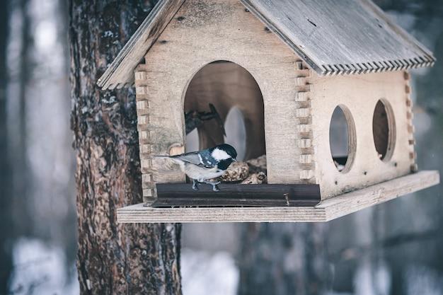 Vogelhuisje op boom