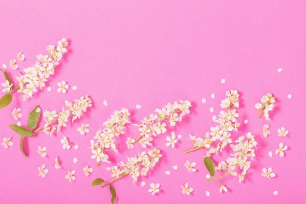 Vogelkers op roze papieren oppervlak
