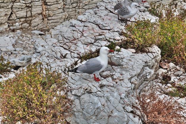 Vogelkolonie in kaikoura, nieuw-zeeland