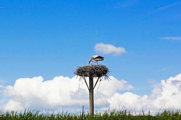 Vogelkraan op het nest, wild dierenthema, blauwe lucht en daglicht
