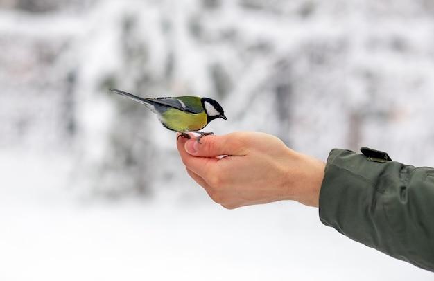 Vogelmees eet voedsel op de handpalm