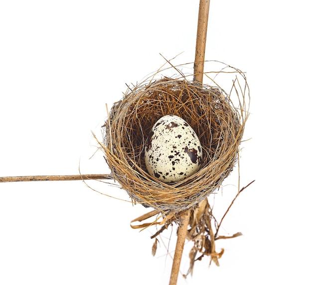 Vogelnest en ei op wit wordt geïsoleerd dat