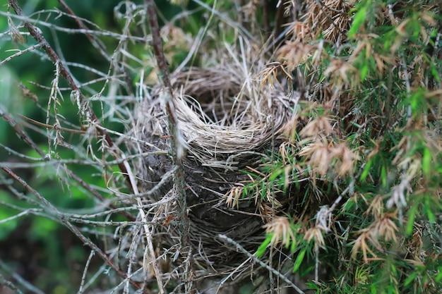 Vogelnest in de natuur