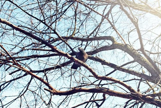 Vogelnest tegen lucht op de kale boom