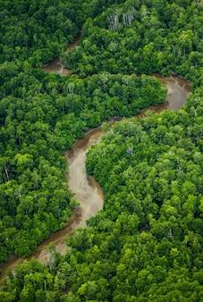 Vogelperspectief van de jungle van nieuw-guinea. mooie vorm van de rivier die door de jungle stroomt. nieuw-guinea. indonesië.