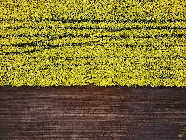 Vogelperspectief van een drone van een voorbijgaand koolzaadgewas, luchtfoto van het voorjaarskoolzaadbloemveld.