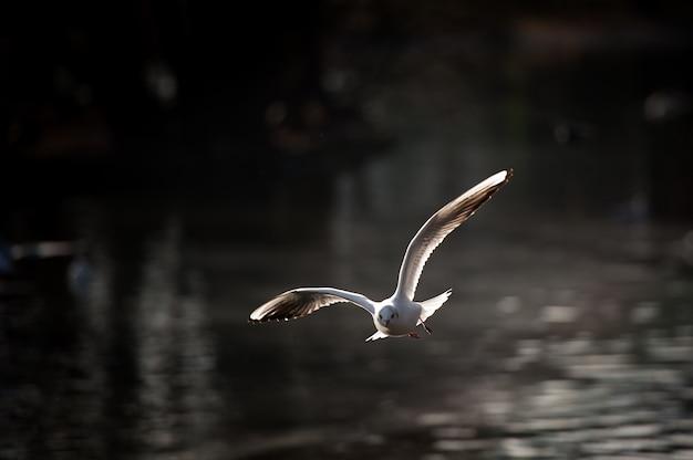 Vogels aan de oever van de vijver in het stadspark.