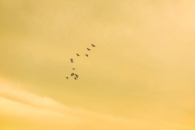 Vogels die naar huis op de zachte wolk van de zonsonderganghemel vliegen