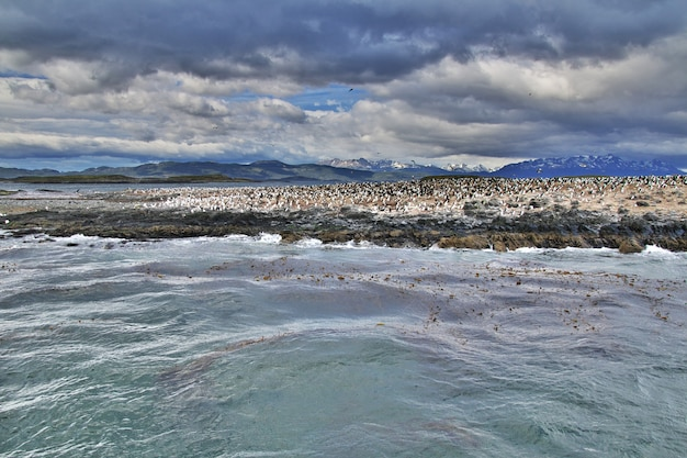 Vogels en pinguïns in beagle-kanaal