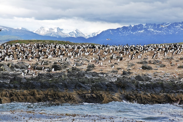 Vogels en pinguïns op het eiland in beagle kanaal sluiten ushuaia stad, tierra del fuego, argentinië