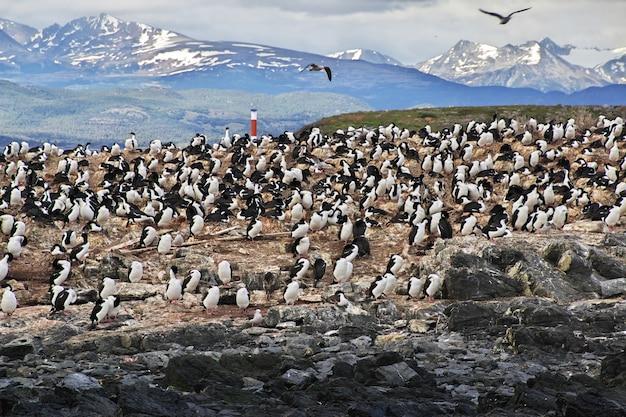Vogels en pinguïns op het eiland in het beagle-kanaal sluiten de stad ushuaia, tierra del fuego, argentinië