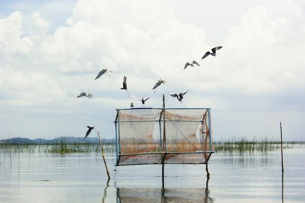 Vogels en visvallen in de zee