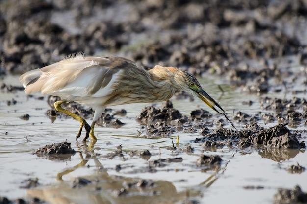 Vogels gebruiken lange, lastige monden die in het waterveld leven