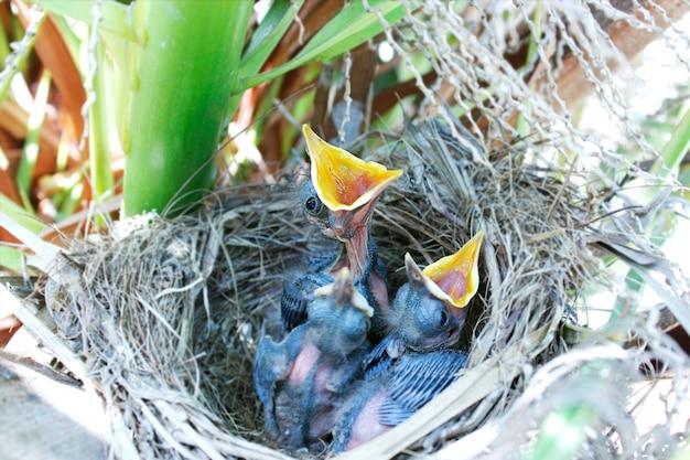 Vogels in nest