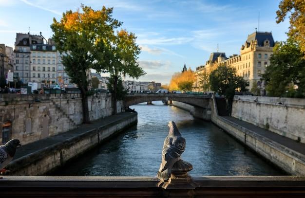 Vogels in parijs. uitzicht vanaf pont au double