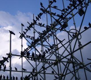 Vogels lage